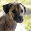 เรื่องราวของสุนัขจรจัด : ความสิ้นหวัง ความเมตตา และความหวังใหม่