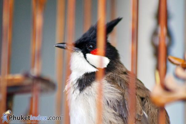 นกกรงหัวจุก สร้างเงิน สร้างรอยยิ้ม