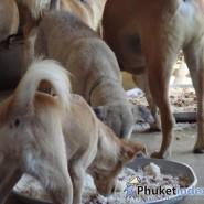 บริจาคอาหารเพื่อสุนัขจรจัด