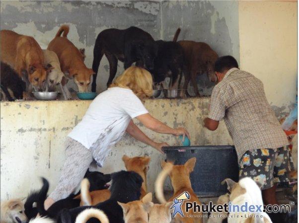 คุณ Rejwan กำลังช่วยกันเทอาหารให้้น้องหมา