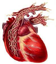 โรคพยาธิหัวใจ