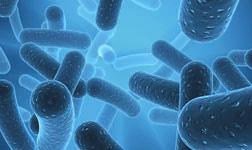 แบคทีเรียที่มีประโยชน์ช่วยเสริมสร้างระบบภูมิคุ้มกันและบำรุงสุขภาพร่างกายโดยรวมของคุณ