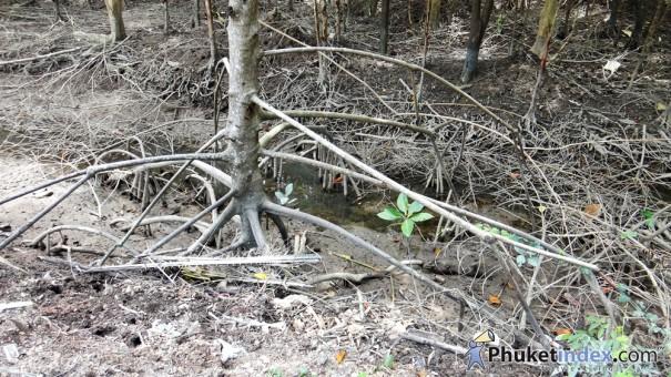 ป่าชายเลน … ป่าแห่งชีวิต