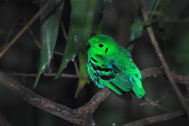 ถ่ายนก Phuket Bird Club
