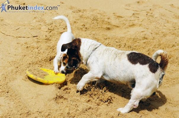 หาดในหาน