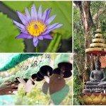 Finding Inner Peace by Carolin Toskar
