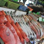 Fresh Seafood Market at Rawai Pier