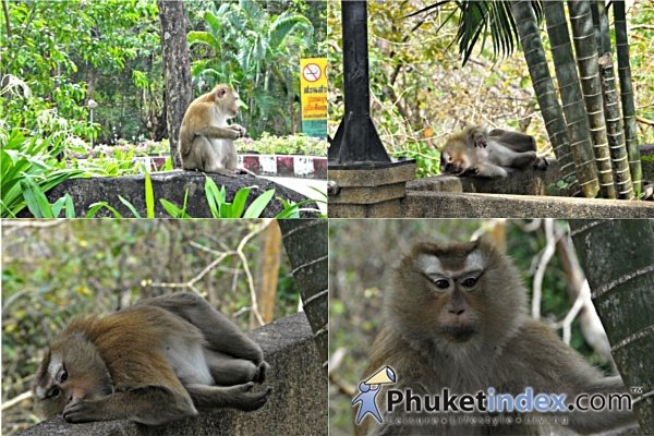 Phuket's Rang Hill - A must place to visit