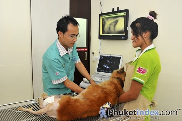 "A 'One Stop"" Care Center for cats & dogs"