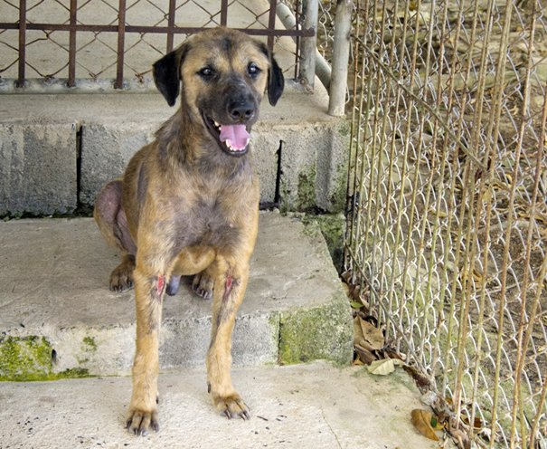 The Story of a Stray Dog: Despair, Kindness, and Hope
