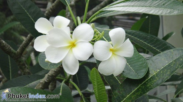 Enhance Your Home's Exterior Using Tropical Flowers