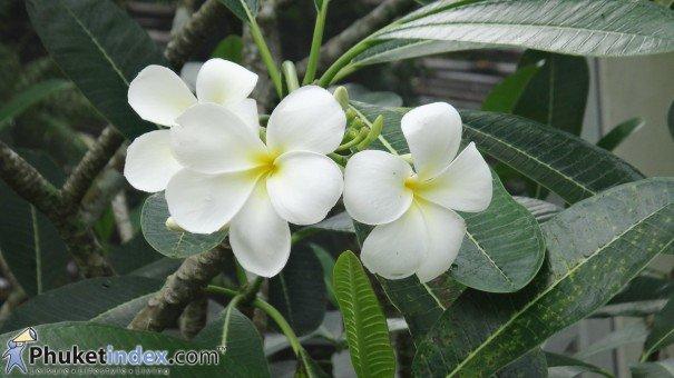 Enhance Your Home's Exterior Using Tropical Flowers